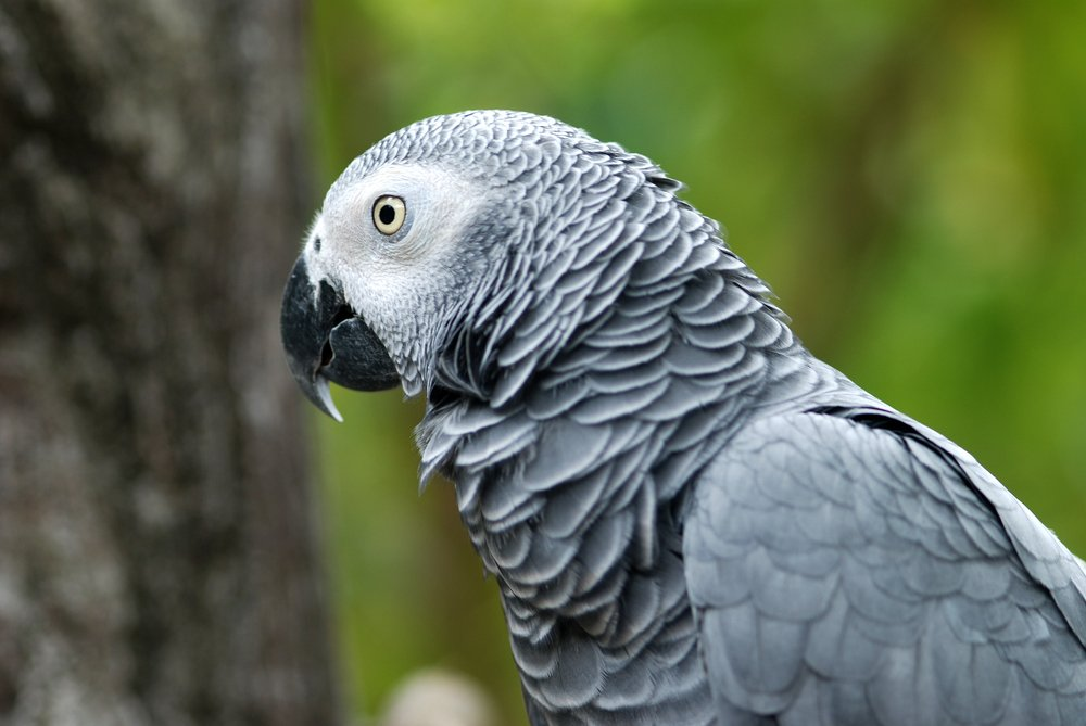 Missing British parrot returns speaking Spanish.